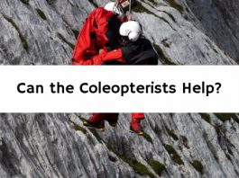 Can the Coleopterists Help?
